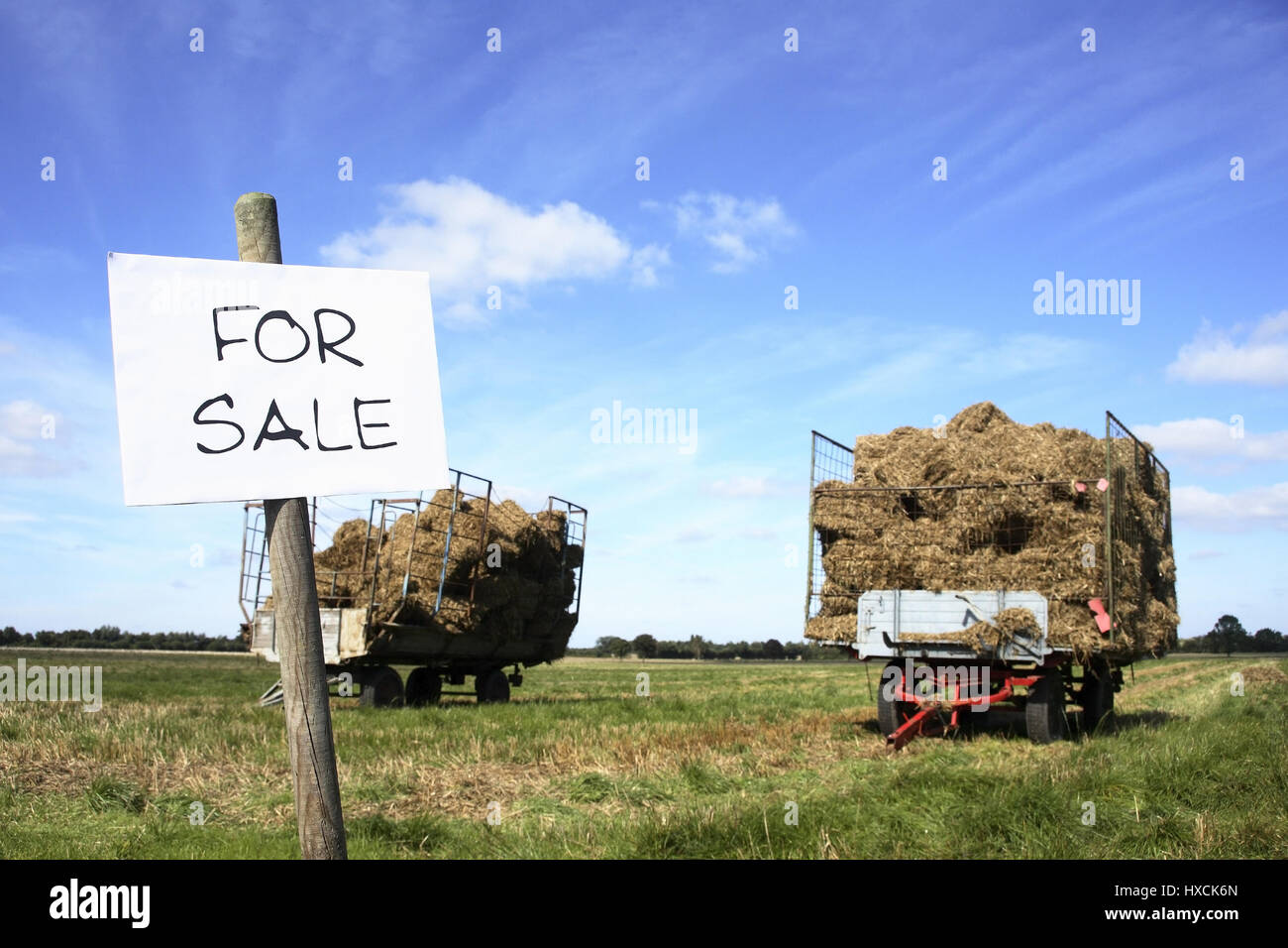 For Sale - Stock Image