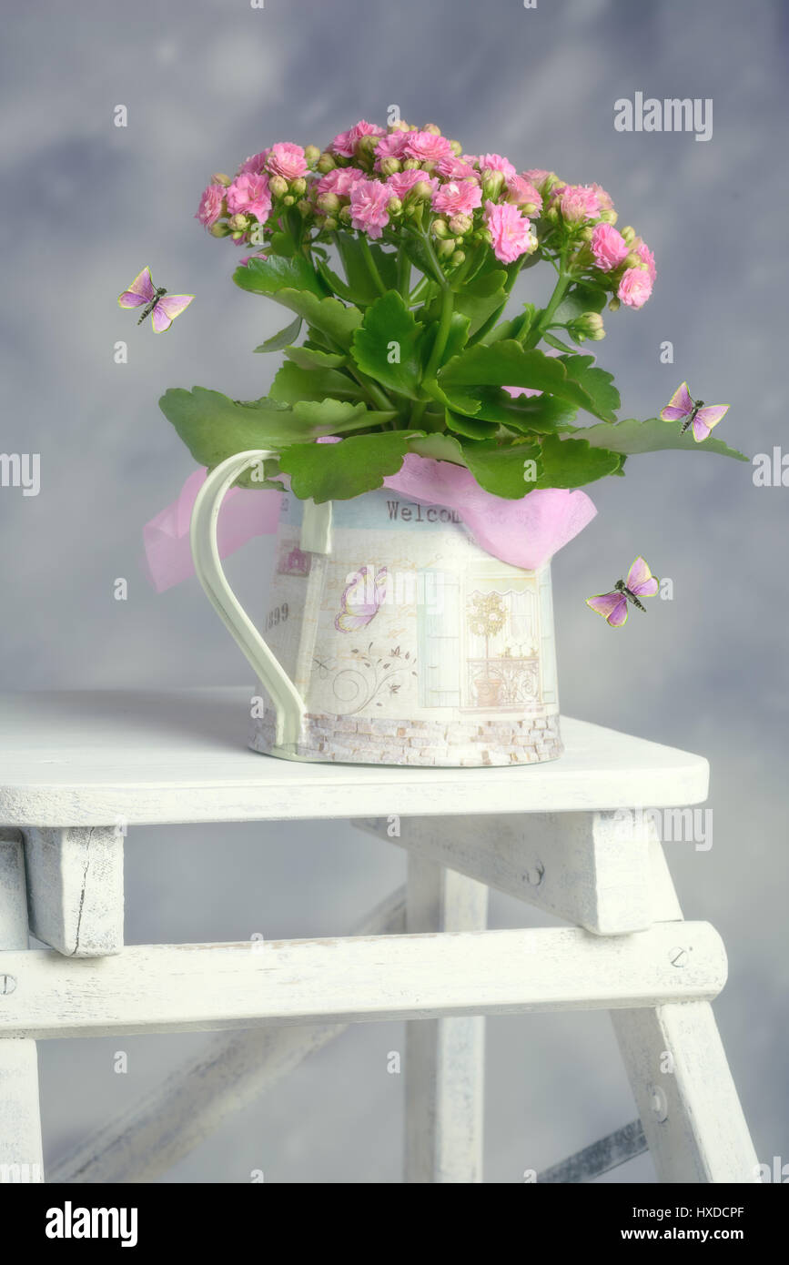 Pretty pink spring plant in watering can with stylised butterflies - Stock Image