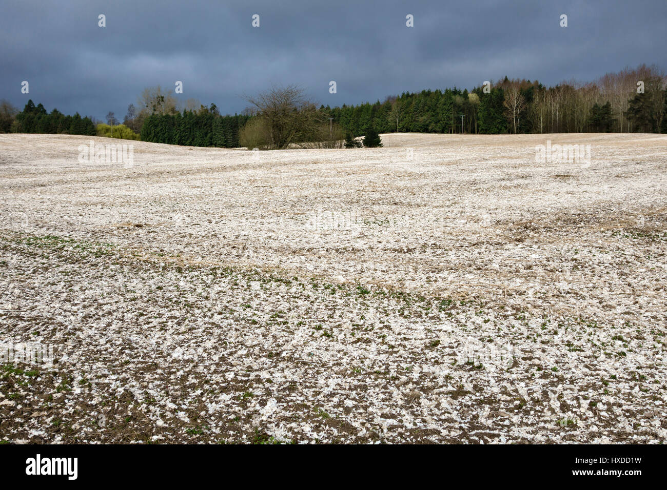 Paper pulp spread on fields as a mulch or soil conditioner, Herefordshire, UK Stock Photo