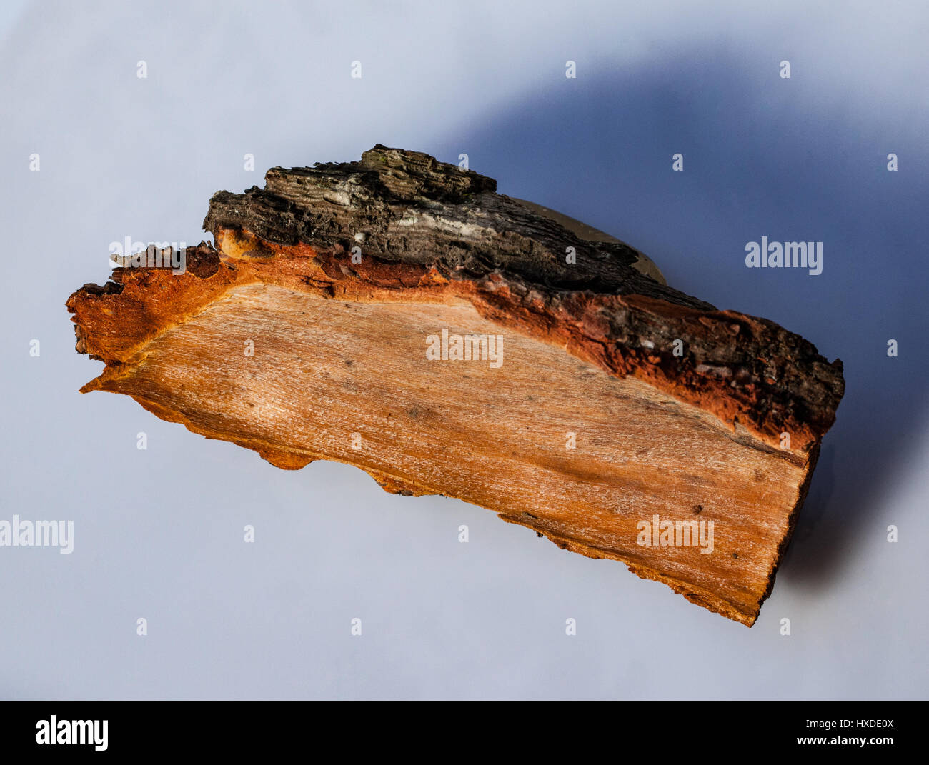 Close-up view of pine tree trunk showing bark and growth rings - Stock Image