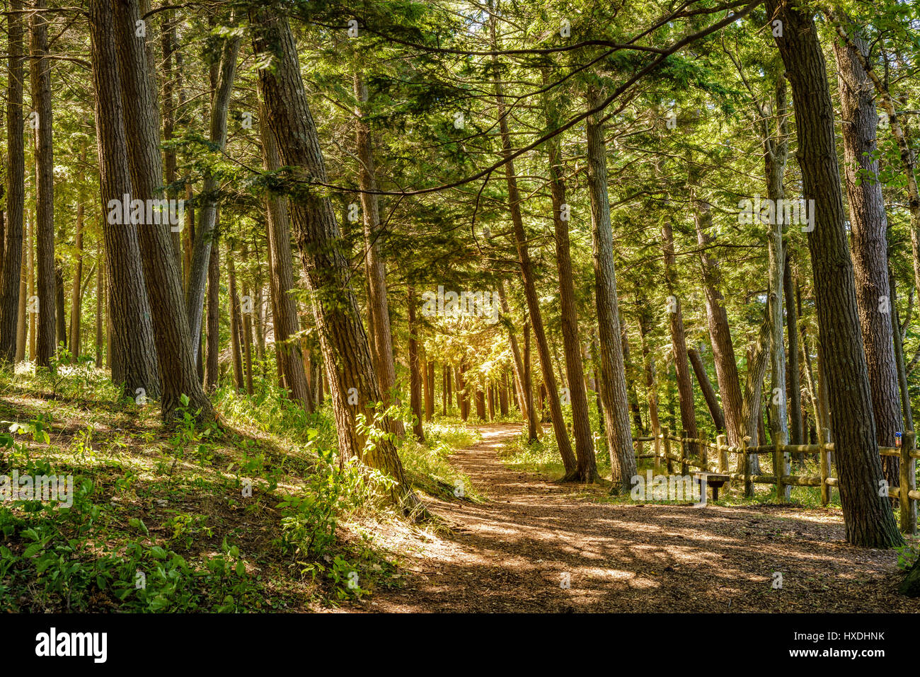 Scenic walking trail in the park in Charlevoix, Michigan - Stock Image