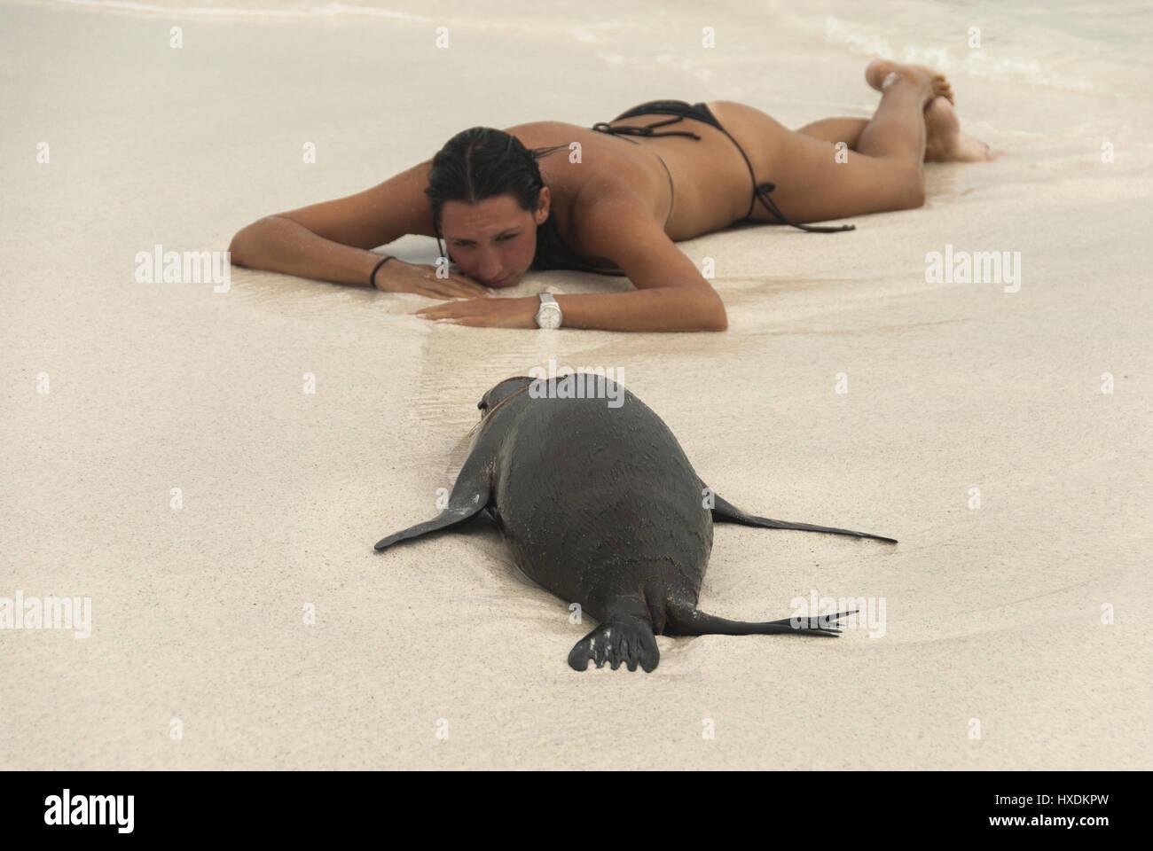 Ecuador, Galapagos, Espanola island, Gardner Bay, Sea lion pup and visitor on beach - Stock Image