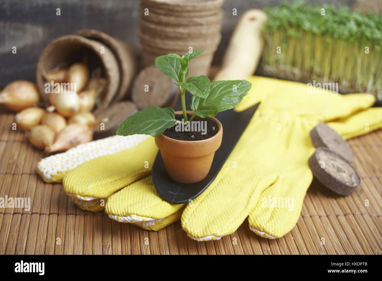 Setzlinge and onions with glove and shovel, Saplings and onions with gloves and shovel |, Setzlinge und Zwiebeln - Stock Image