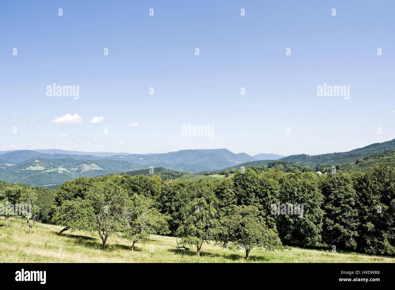 Panorama in Vosges Mountains, panorama in the Vosges  , Panorama in den Vogesen  Panorama in the Vosges  - Stock Image
