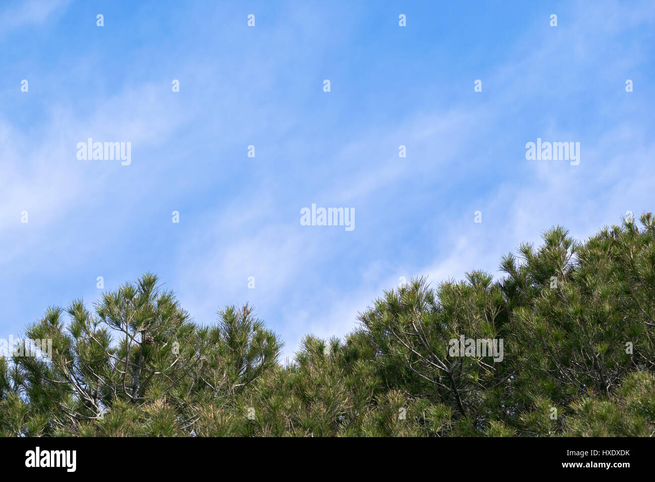 blue sky with clouds adobe pine trees - Stock Image