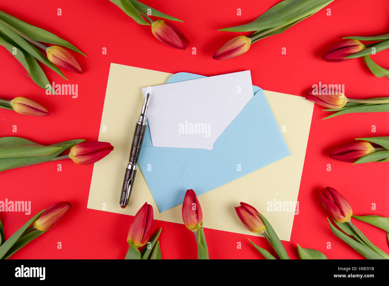 Blank card, pen, blue envelope and red spring tulips flowers on red background. Top view. Flat lay Stock Photo