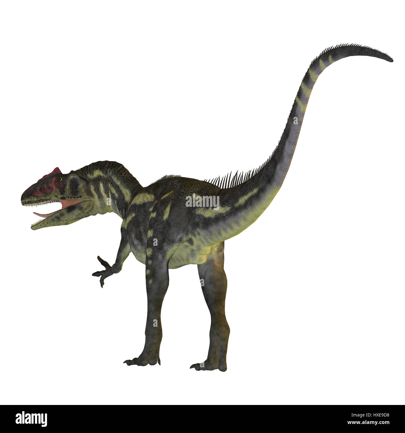 Allosaurus was a carnivorous theropod dinosaur that lived in North America in the Jurassic Period. - Stock Image