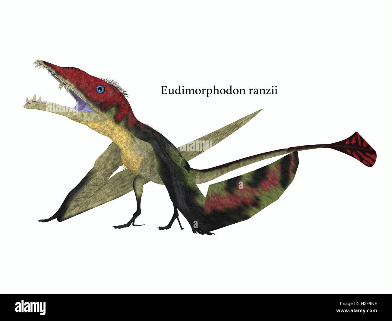 The carnivorous Eudimorphodon was a pterosaur flying reptile that lived in Italy in the Triassic Period. - Stock Image