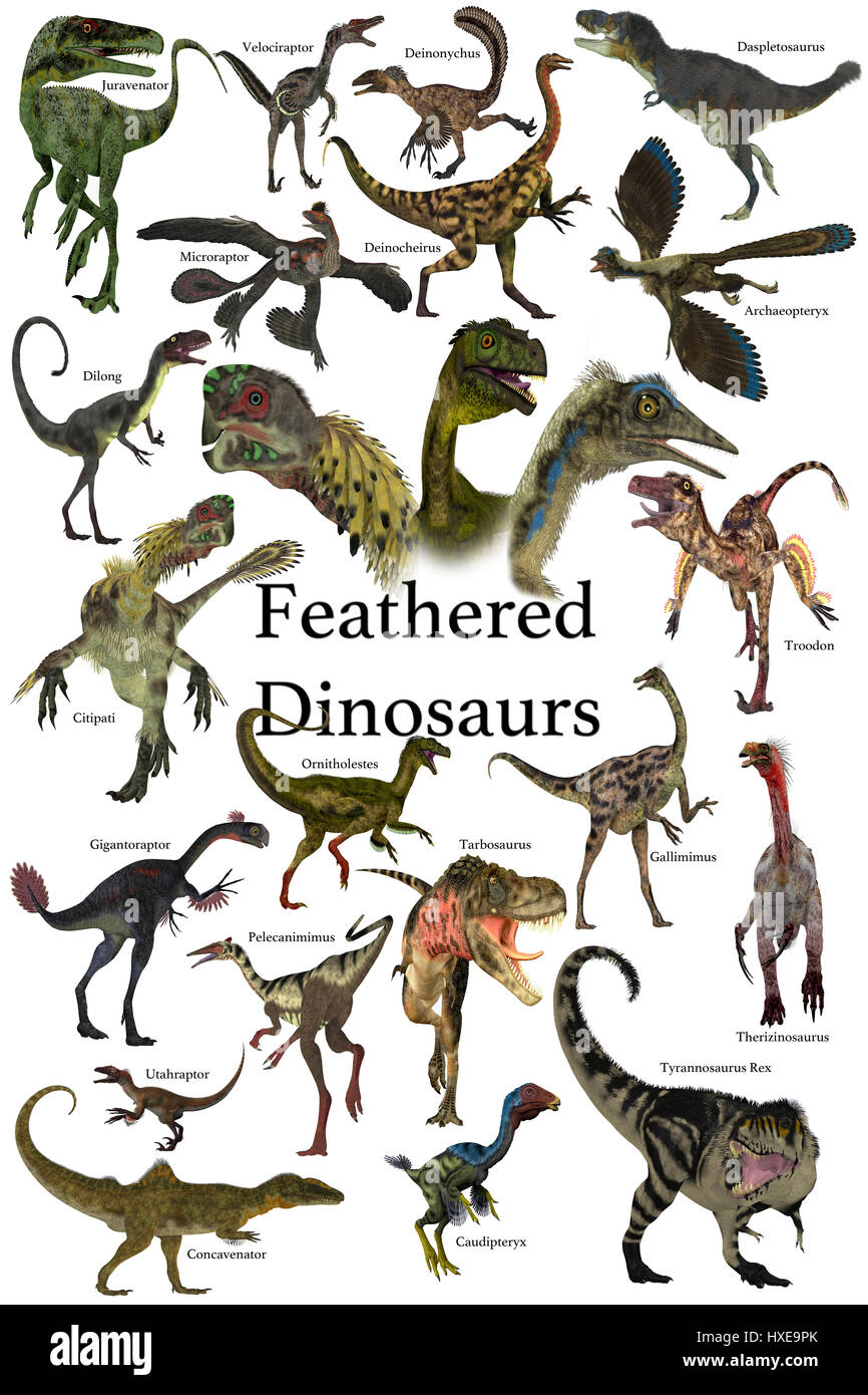 Feathered Dinosaurs -  A collection of various feathered dinosaurs from different prehistoric periods of Earth's - Stock Image