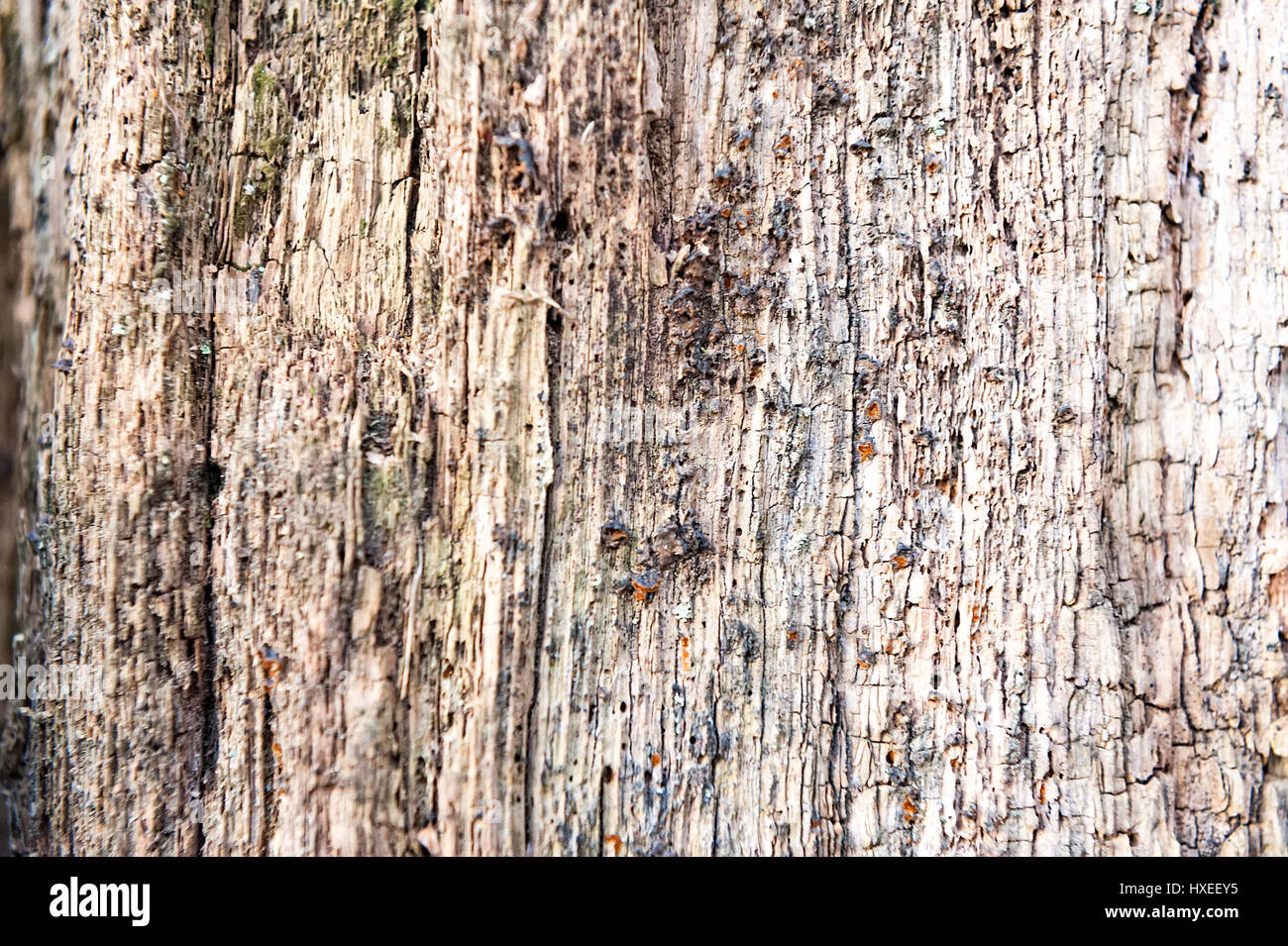Weathered obsolete rough cracked textured wooden background - Stock Image