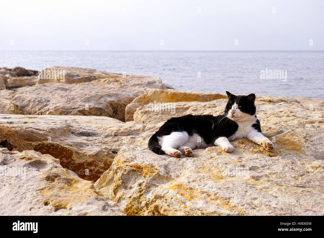 Black and white street cat laying on rocks with  background of sea. - Stock Image