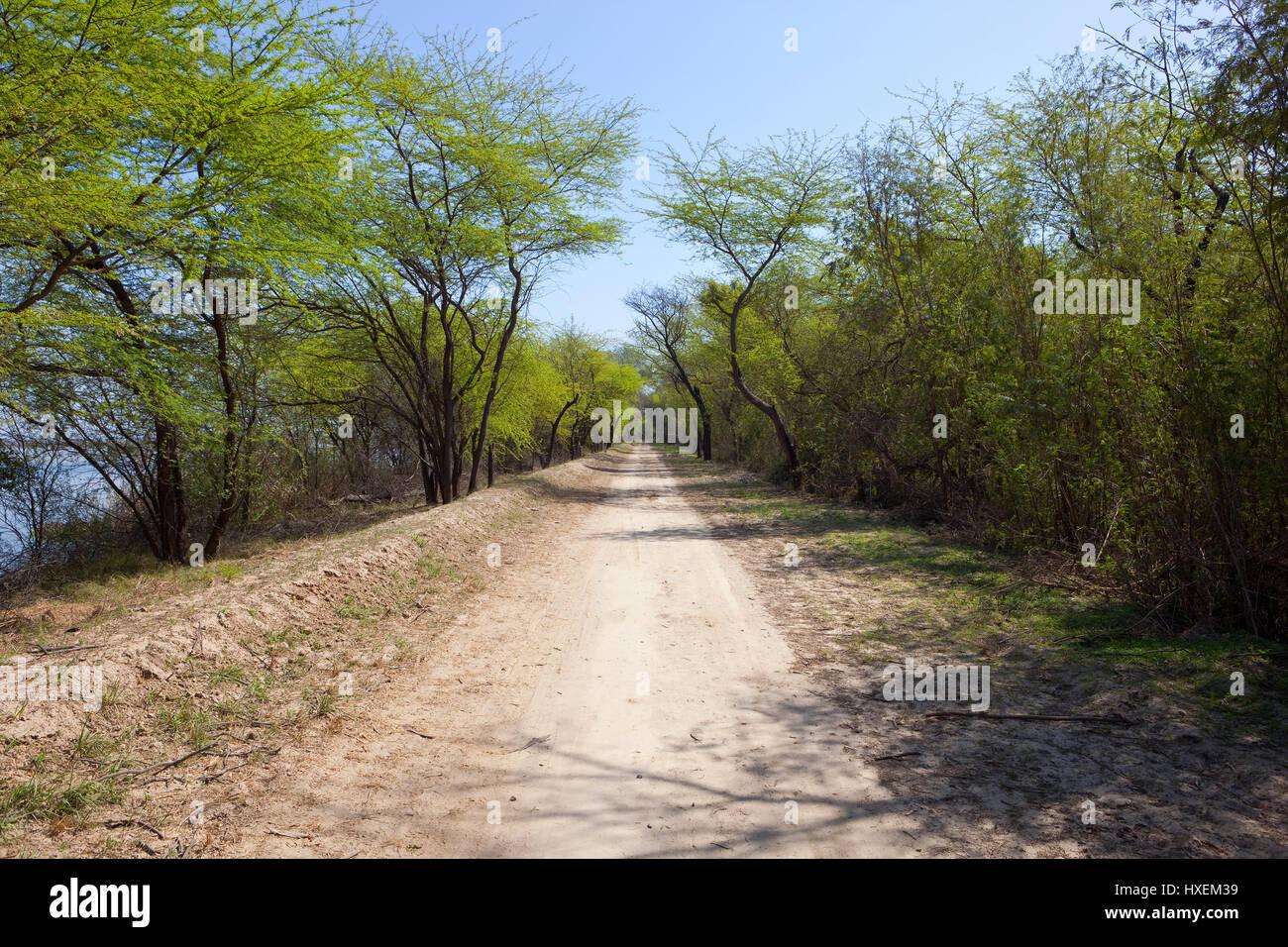 an acacia lined sandy road at harike wetlands punjab india under a blue sky - Stock Image