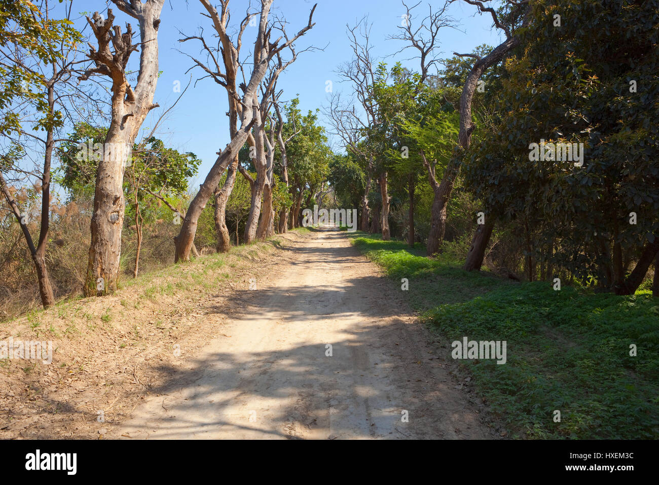 a tree lined sandy road at harike wetlands india under a blue sky - Stock Image