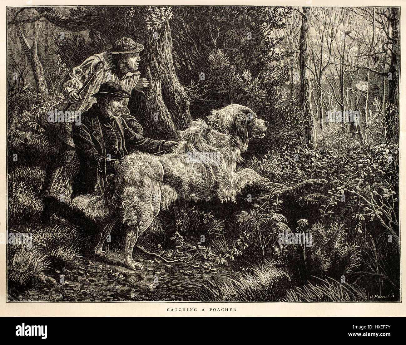 1874 antique Victorian illustration 'Catching a Poacher' by Horace Harral from 'The Graphic' weekly - Stock Image