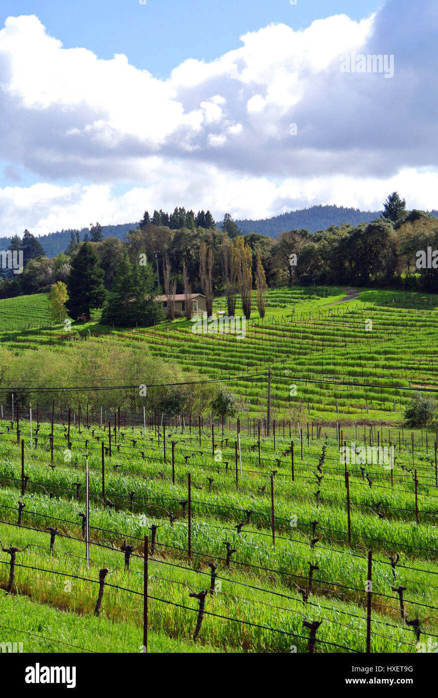 view of anderson valley california winery in northern california - Stock Image