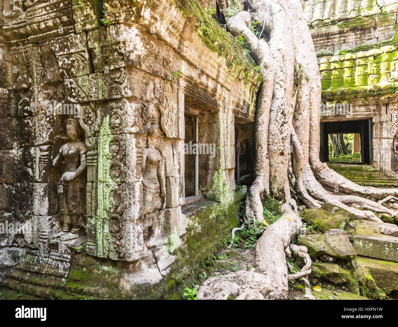 Bas relief and trees merging with the old stone of the famous Khmer Ta Prohm temple in Angkor, Siem Reap in Cambodia - Stock Image