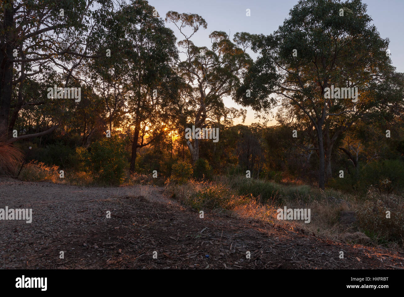 Lesmurdie National Park, Perth, West Australia. Sunset shining through the trees near the upper Lesmurdie falls, - Stock Image
