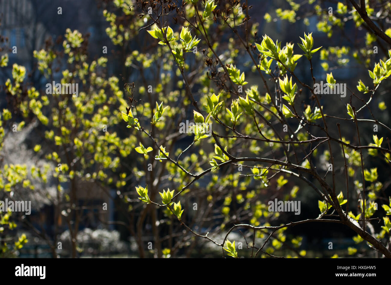 Impressions from the public parkland in Berlin-Wilmersdorf. Flowers, buds in the morning sun. - Stock Image