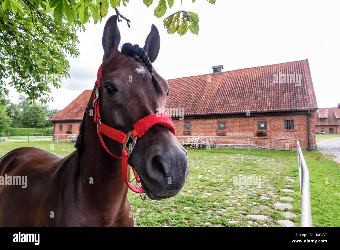stud in Masuria in Poland - Stock Image