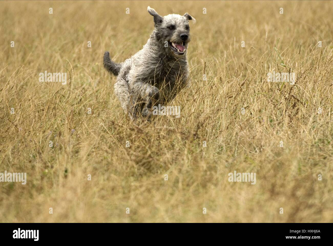 DOG SCENE MY TALKS WITH DEAN SPANLEY (2008) - Stock Image