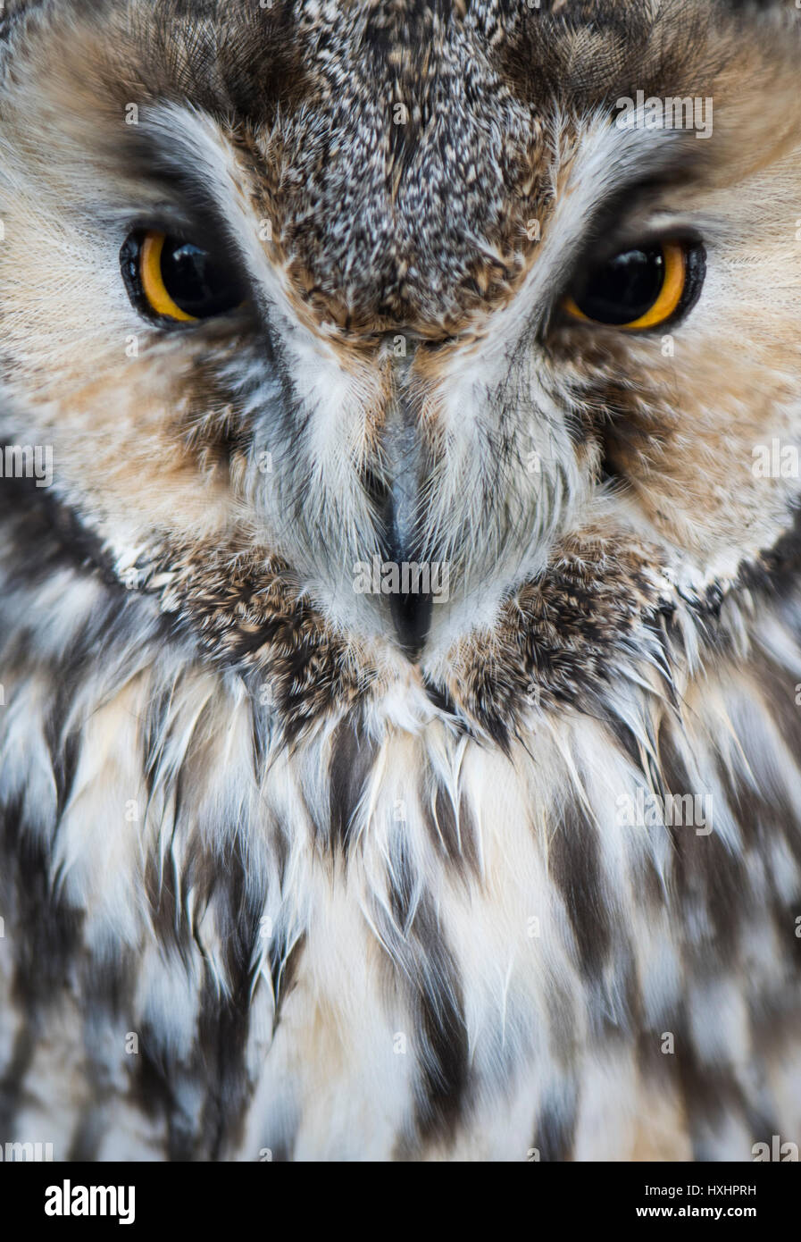 Pretty Owl - Stock Image