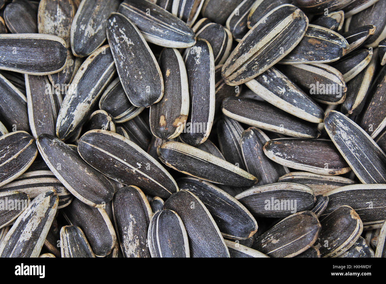 Sunflower Seeds Seed Texture As Background Black And White Roasted Organic Food Photography In Studio