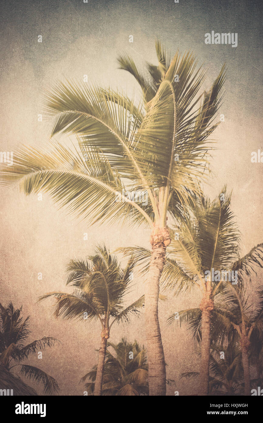 Vintage textured tropical palm trees - Stock Image