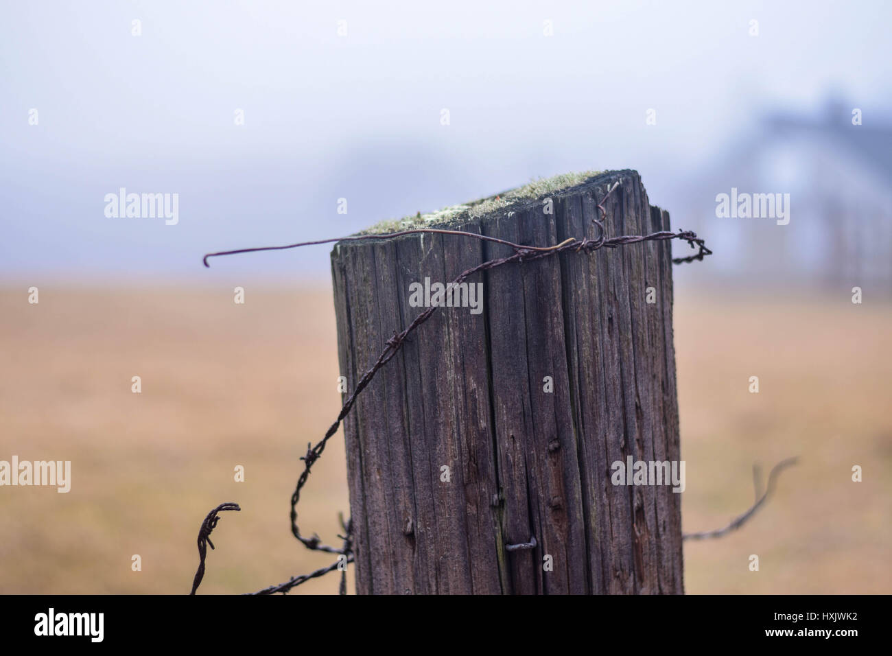 close up of fence post with barbed wire and moss - Stock Image