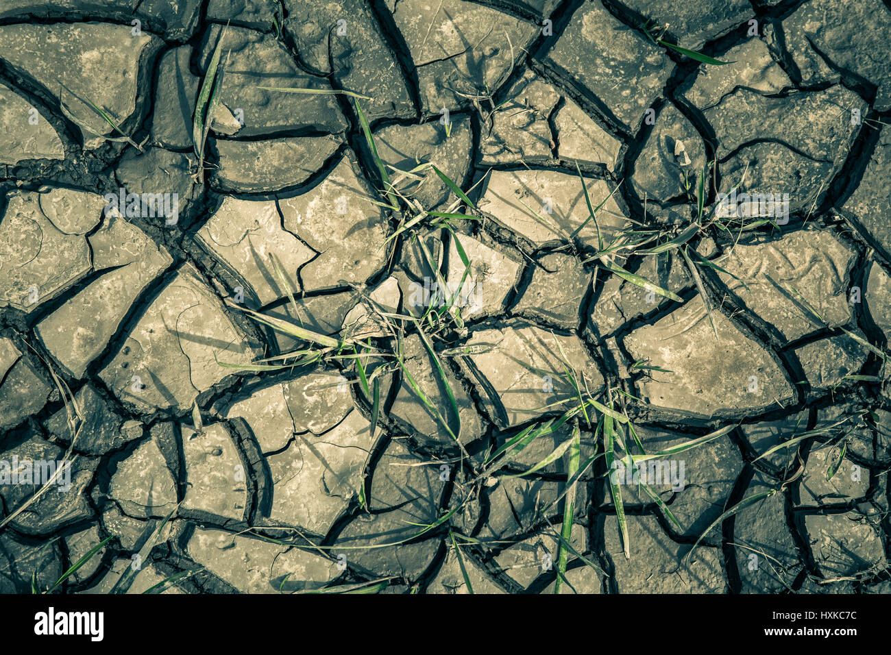 Cracked mud and grass. - Stock Image