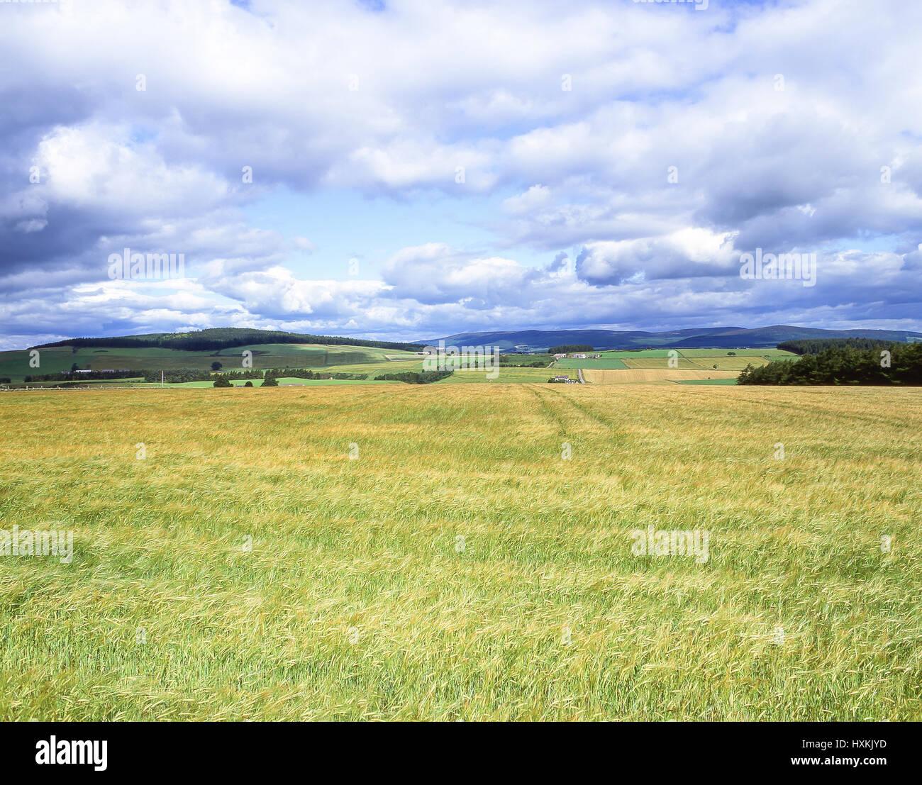 Rolling landscape, Correen Hills, Aberdeenshire, Scotland, United  Kingdom - Stock Image