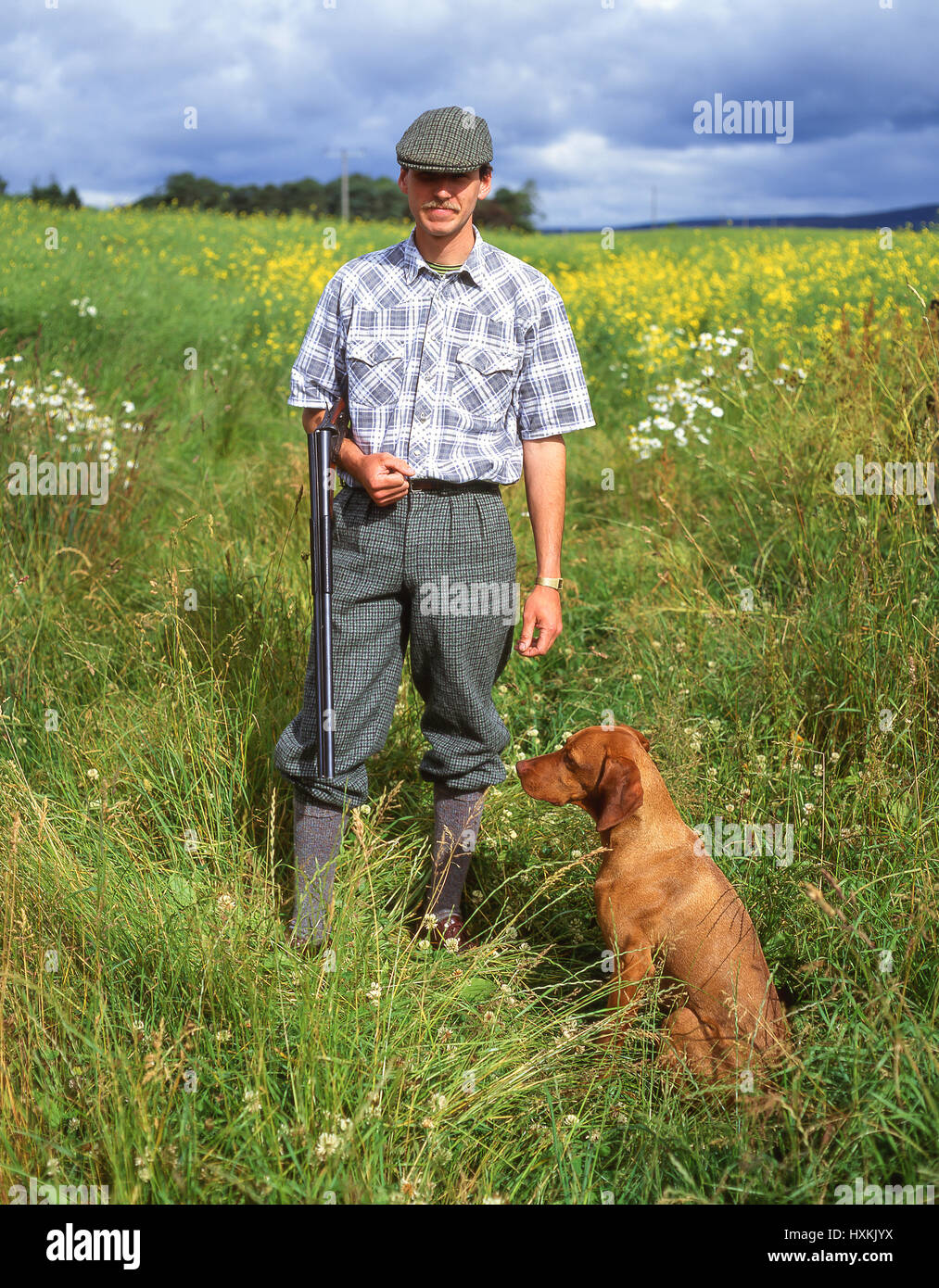Man in countryside hunting with Magyar Vizsla dog, Fife, Scotland, United Kingdom - Stock Image