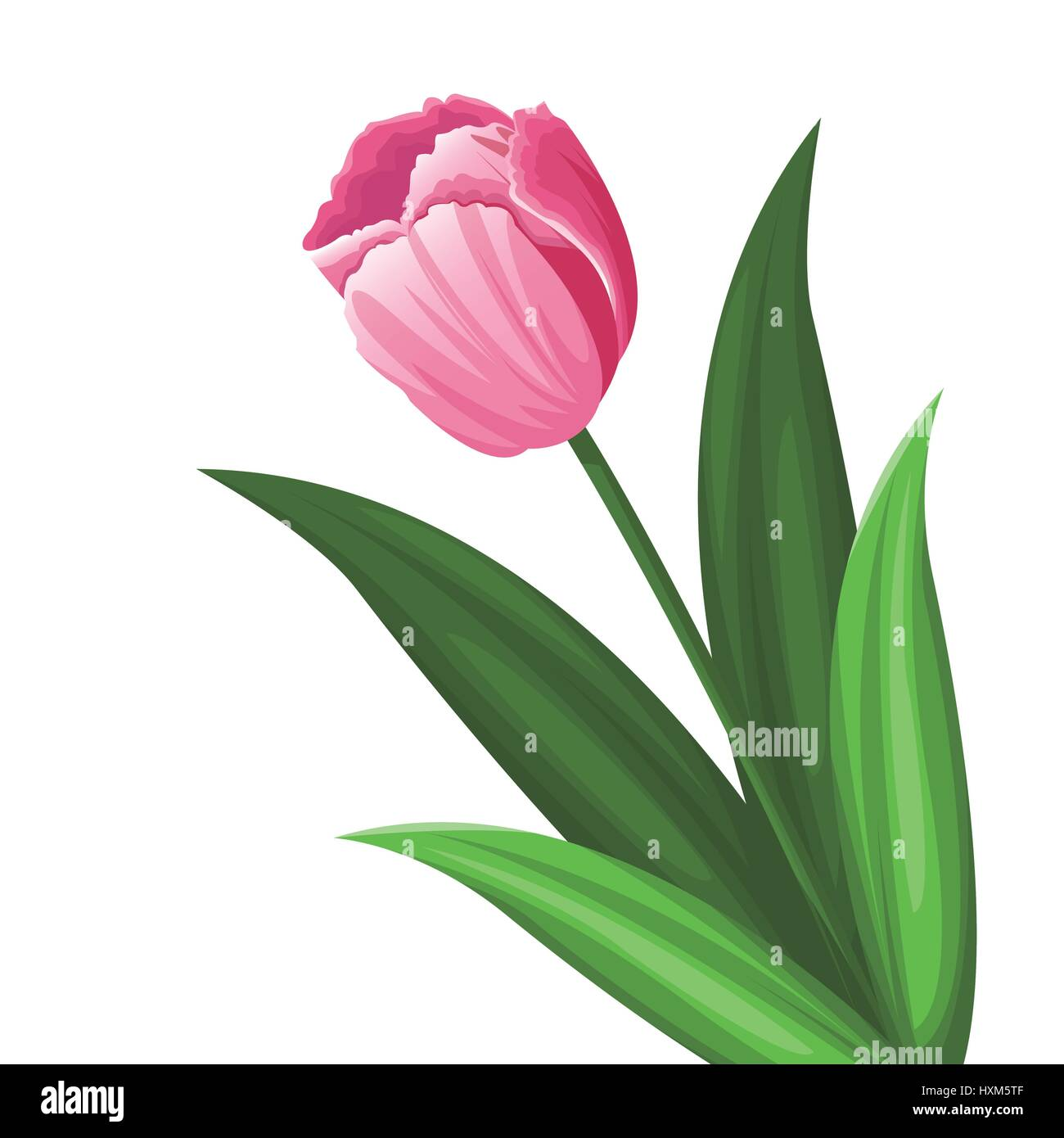pink tulip flower decoration Stock Vector