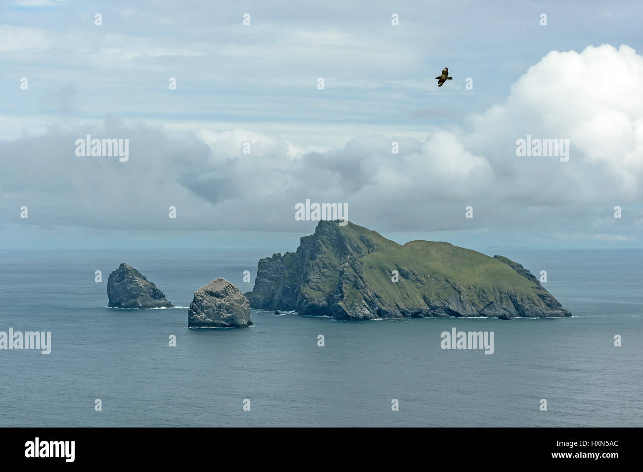 """Island of Boreray, Stac Lee and Stac an Armin in the Saint Kilda archipelago, seen from Hirta. Great skua or """"bonxie"""" Stock Photo"""