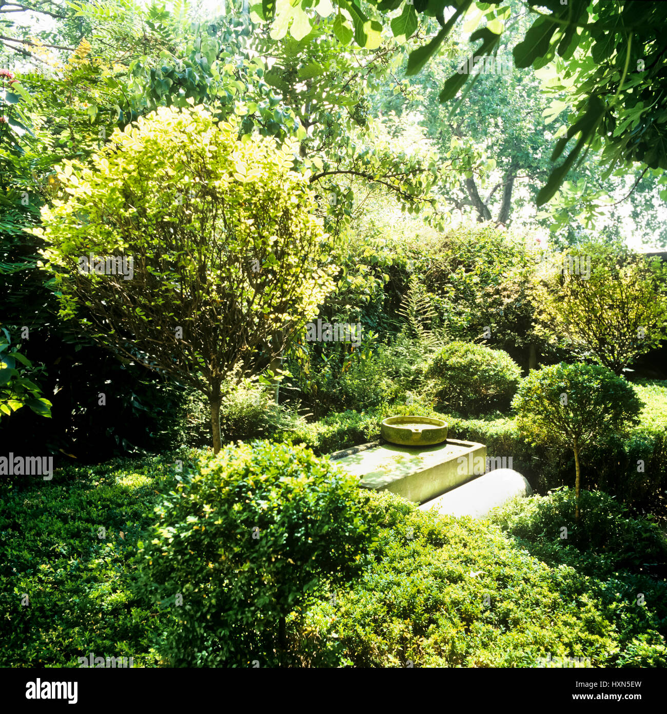 Garden with trees. - Stock Image