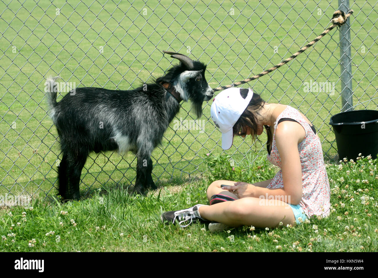 Young girl on her iphone, with small goat beside her Stock