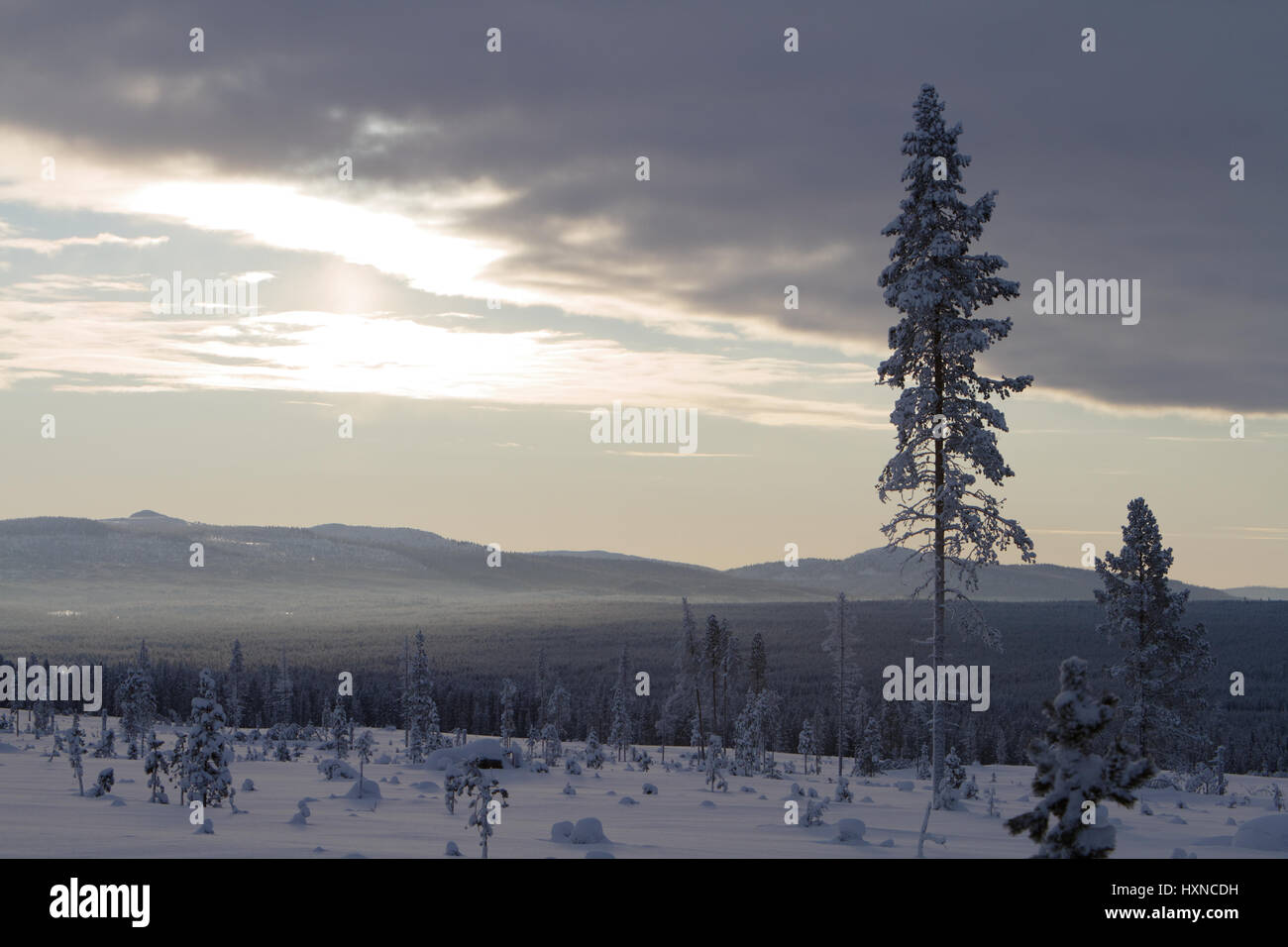 Foggy winter landscape in Laponia, Northern Sweden - Stock Image