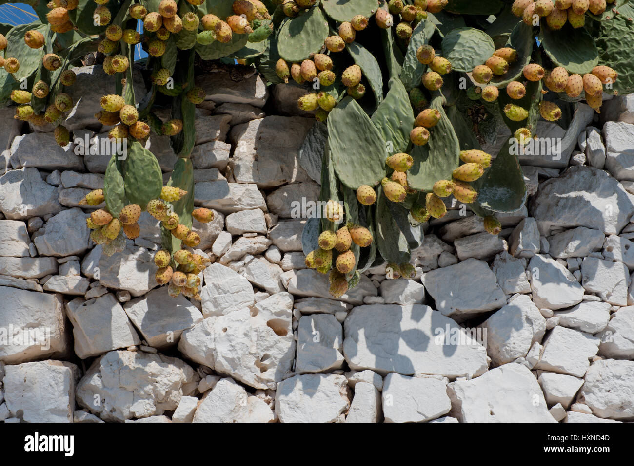 alte Mauer mit Kaktusfeigen in Iraklia Insel, kleine Kykladen, Griechenland - Stock Image