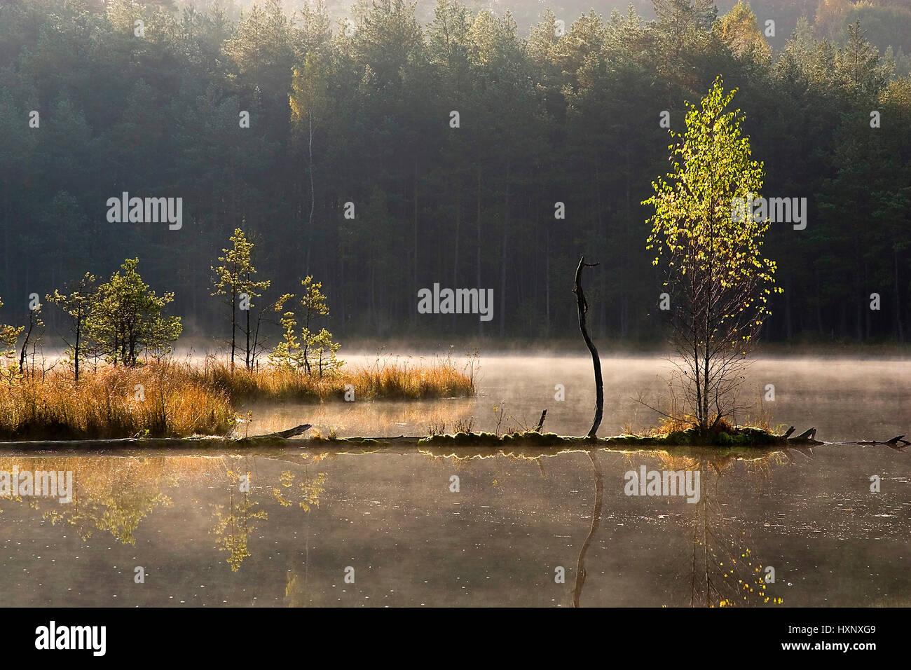 A birch grows from a trunk fallen in the water. Masuria Poland, Eine Birke wächst aus einem ins Wasser gefallenen Stock Photo