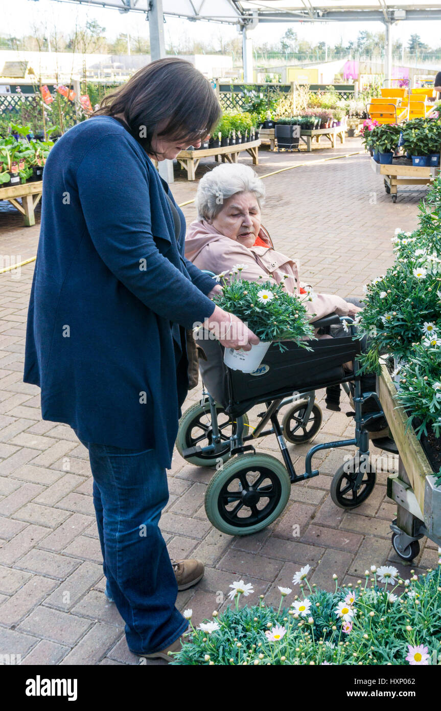 An elderly lady in a wheelchair shops with her carer in a Dobbies garden centre. - Stock Image