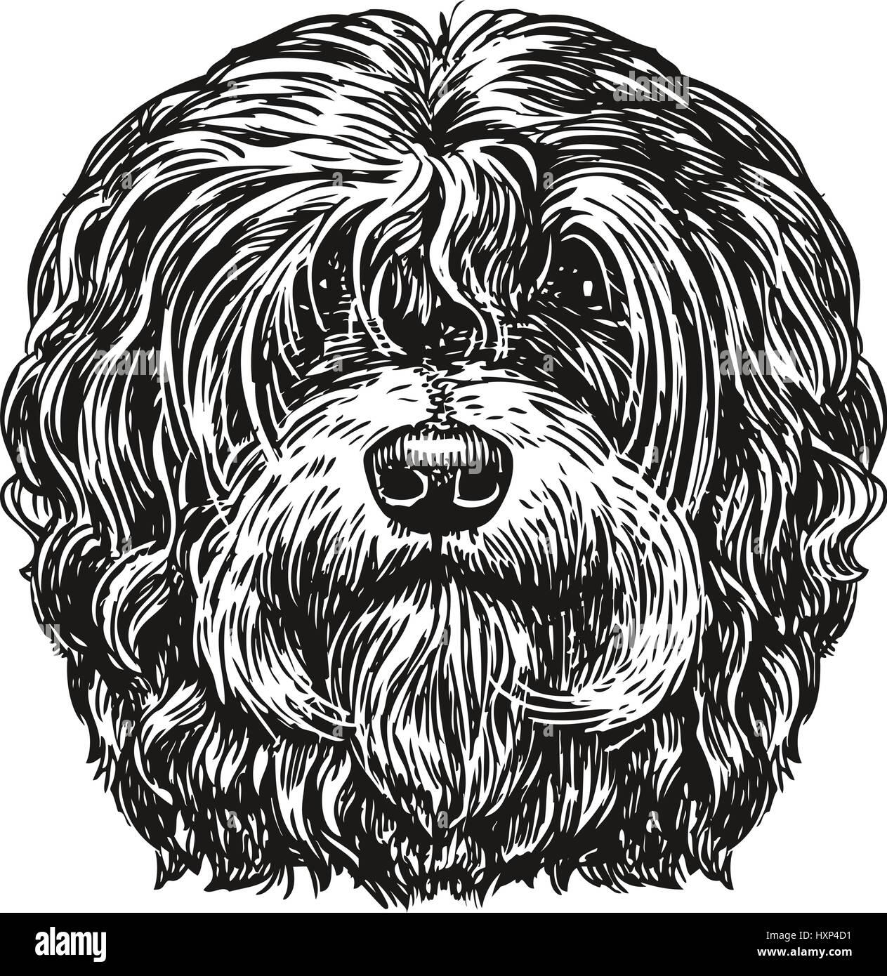 Hand drawn portrait lapdog. Dog, pet, animal sketch. Vintage vector illustration - Stock Image
