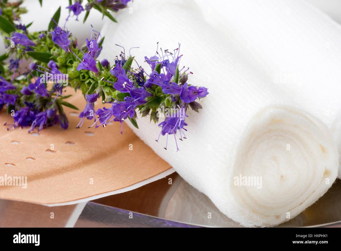 Ysop (Hyssopus officinalis) beside association material, helps in wounds, Ysop (Hyssopus officinalis) neben Verbandmaterial, - Stock Image