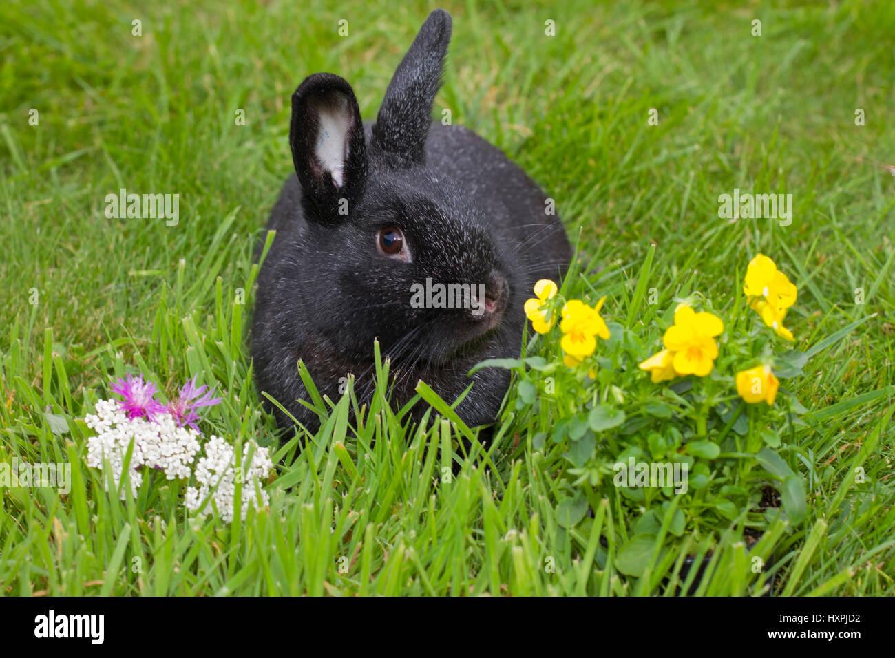 Race rabbits with Blumendeko, Rassekaninchen mit Blumendeko Stock Photo