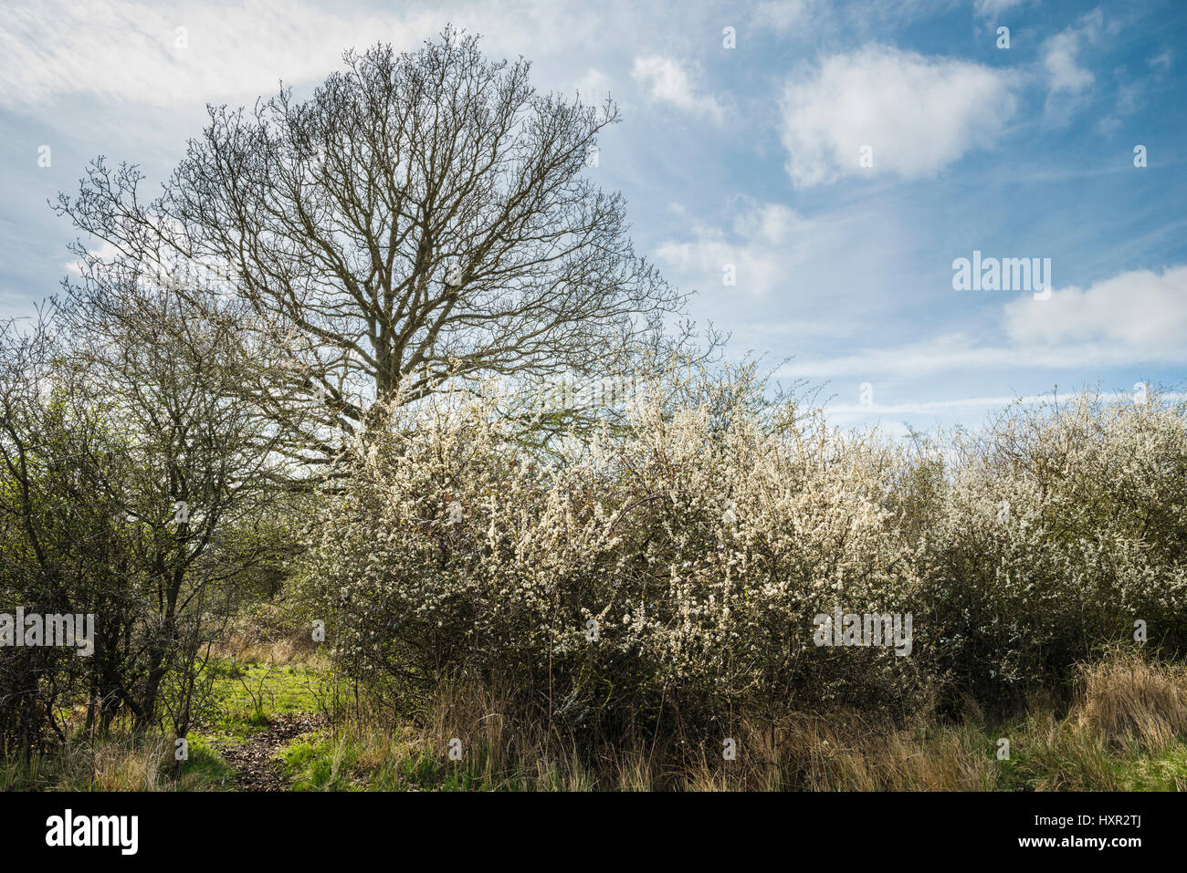 Castor Hanglands National Nature Reserve (NNR) and Site of Special Scientific Interest (SSSI), Cambridgeshire, in - Stock Image