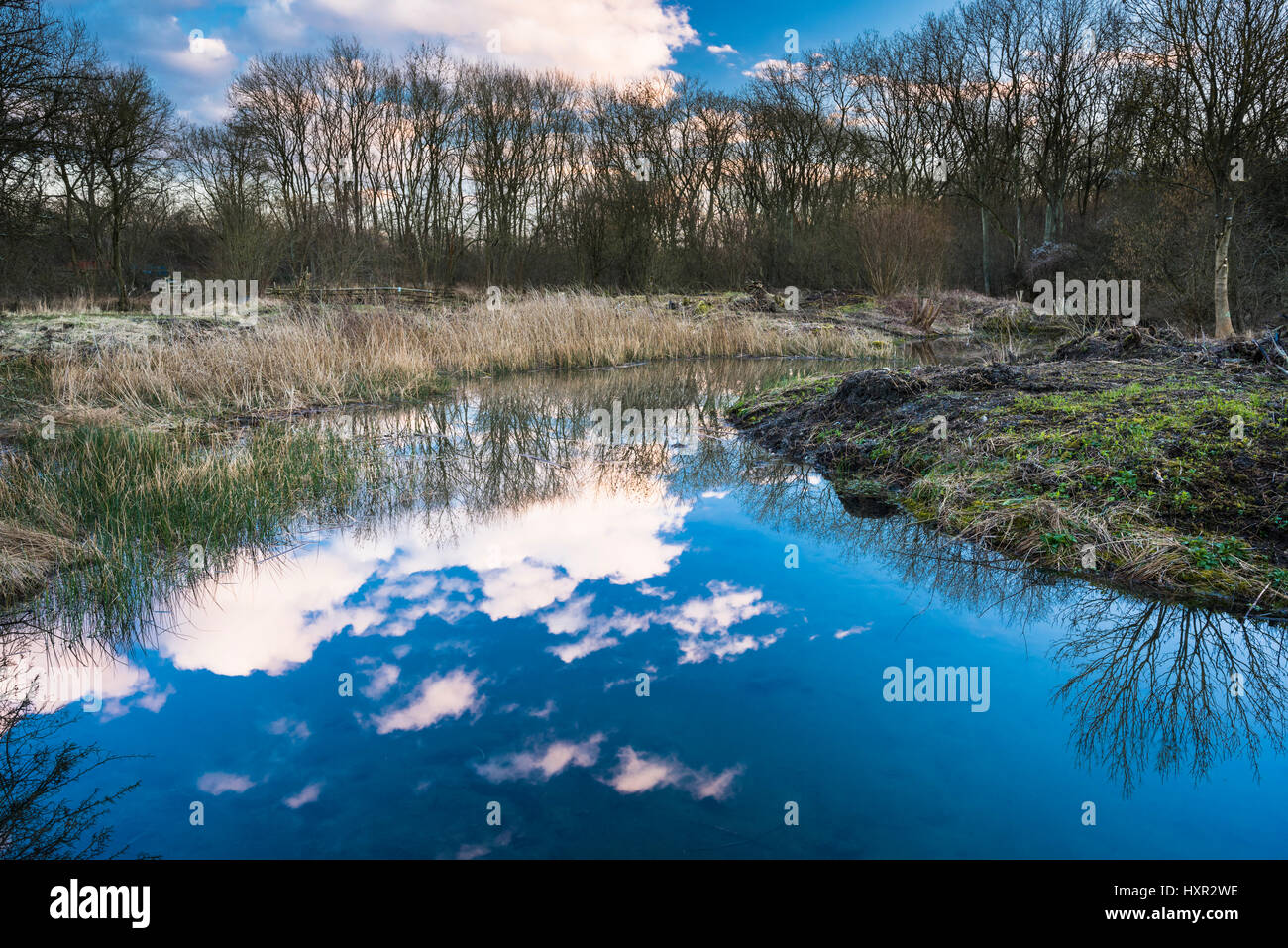 The pond at Castor Hanglands National Nature Reserve (NNR) and Site of Special Scientific Interest (SSSI), Cambridgeshire, - Stock Image