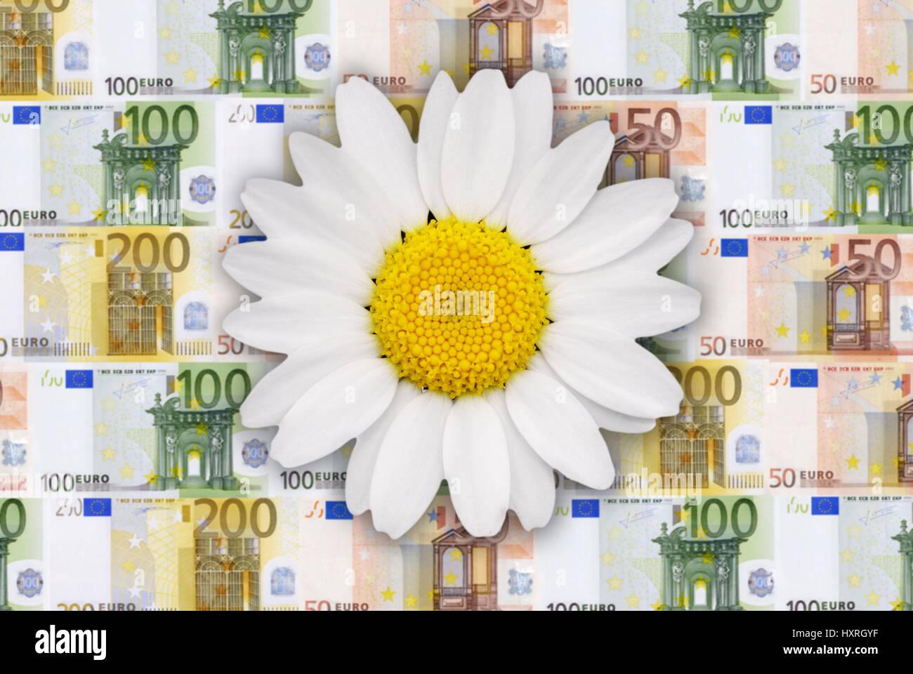Flower before bank notes, ecology and economy, lastingness, Blume vor Geldscheinen, Ökologie und Ökonomie, - Stock Image