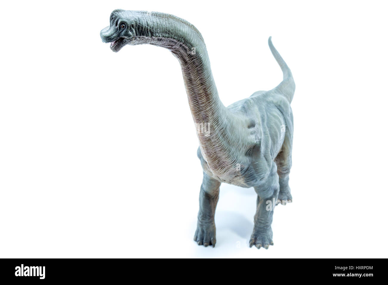View from the top of Green Brachiosaurus altithorax from the Late Jurassic full body white background Stock Photo