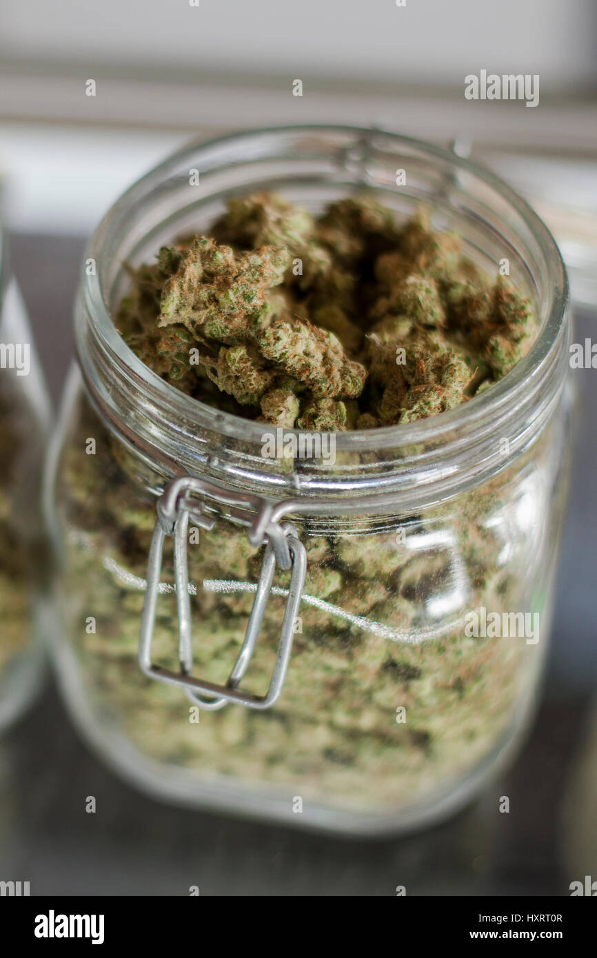 Glass jars full of marijuana buds on display and for sale at a dispensary in Colorado - Stock Image