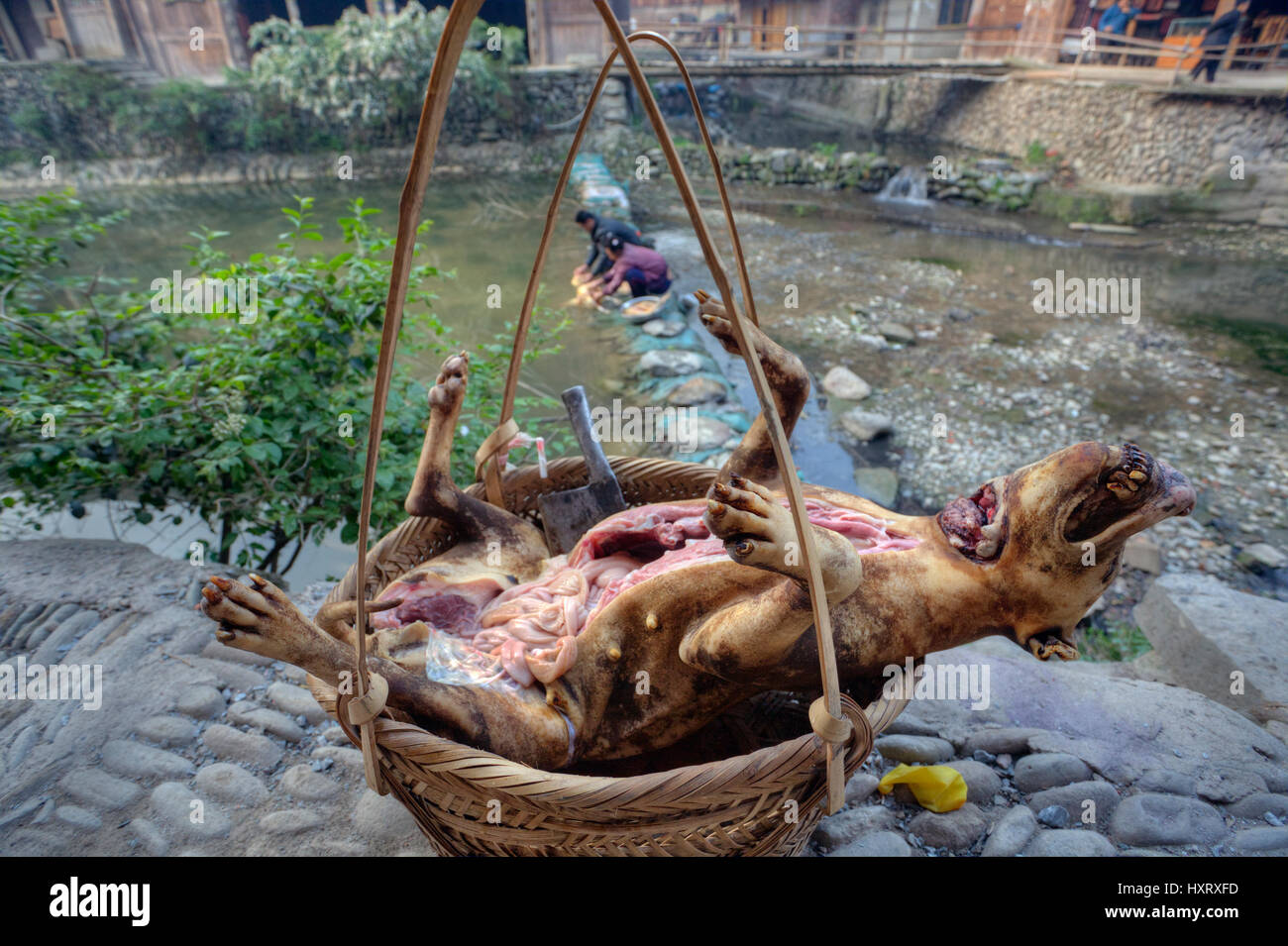 Zhaoxing Dong Village, Guizhou Province, China -  April 9, 2010: Carcass slaughtered and eviscerated dog is in a Stock Photo