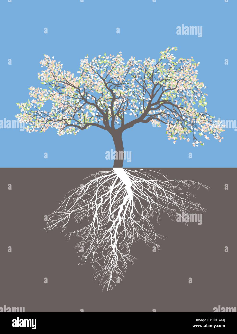Apple tree in springe with roots - Stock Image