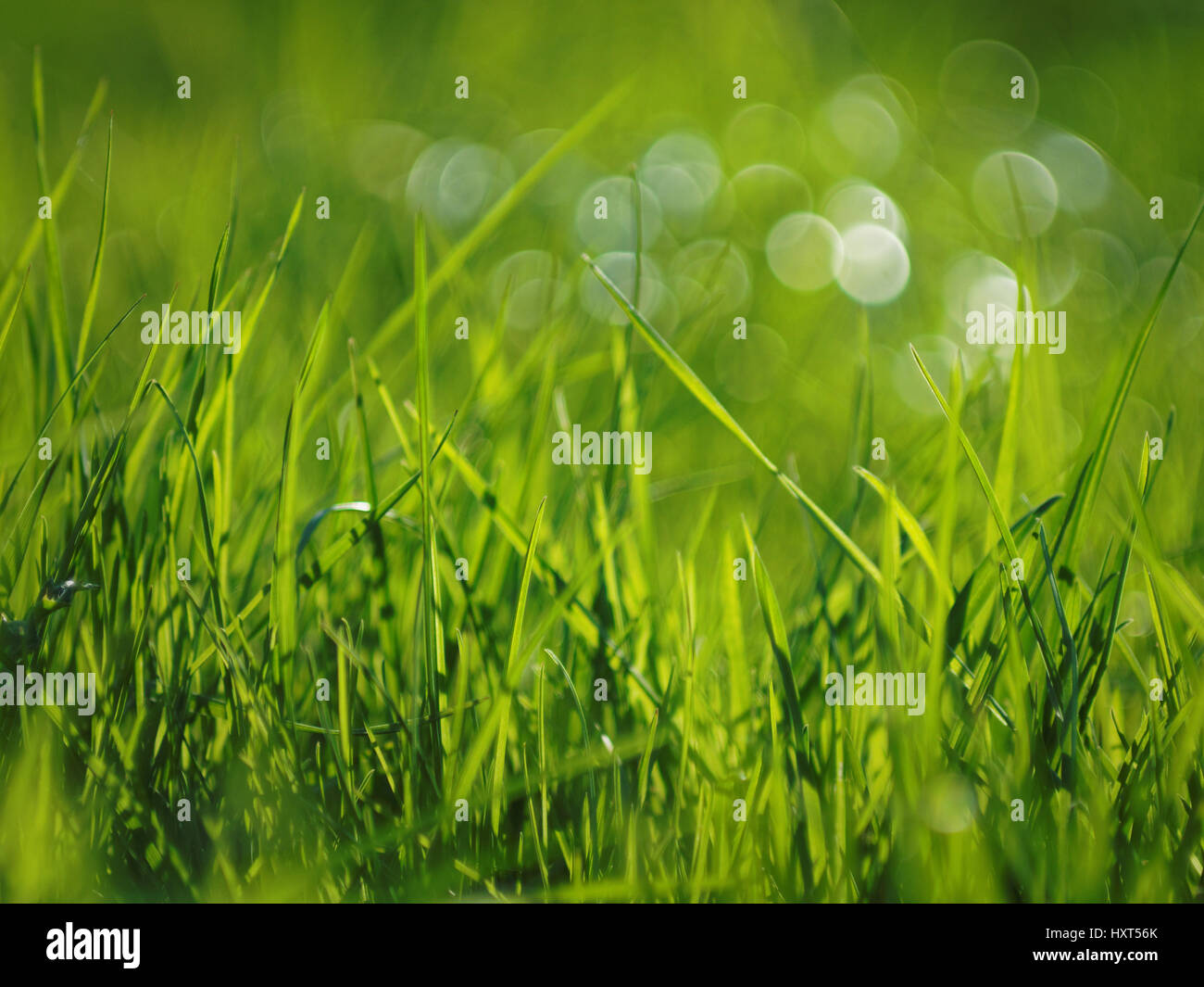 grass and bokeh bubbles on a sunny day - Stock Image